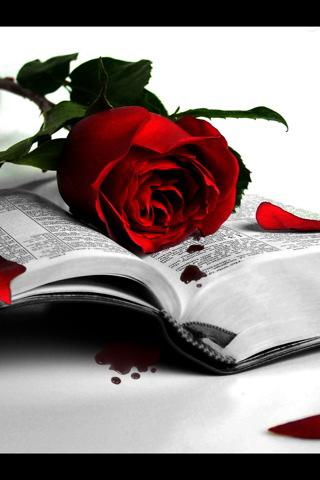 wallpaper roses red. wallpaper roses red. wallpaper