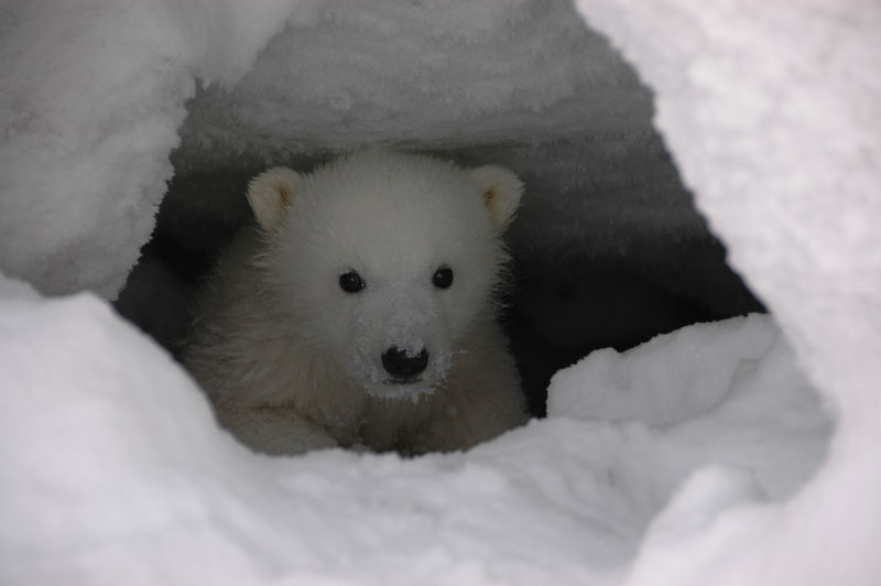 polarbear01.jpg