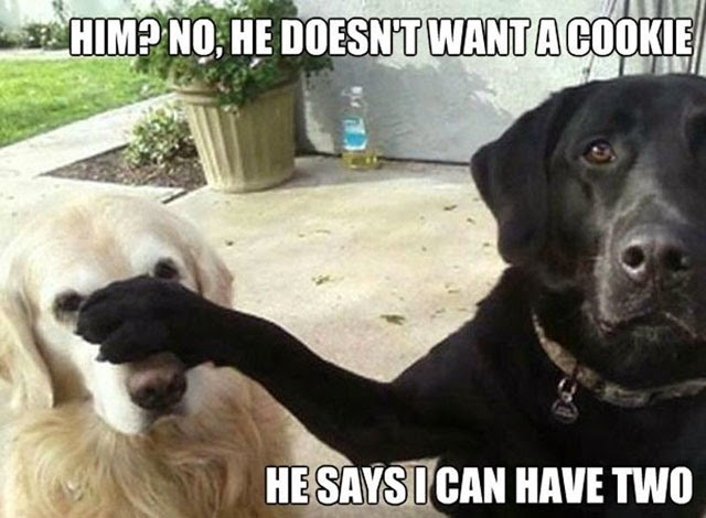 amazing-photo-session-of dogs-dogs-amazing-comedy-photos-funniest-dogs images