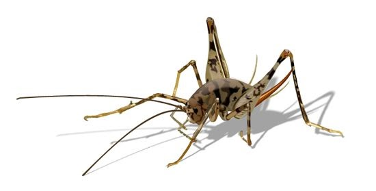 tl2121 how to get rid of camel crickets spider crickets