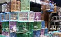 pasar burung bukittinggi sumatera barat