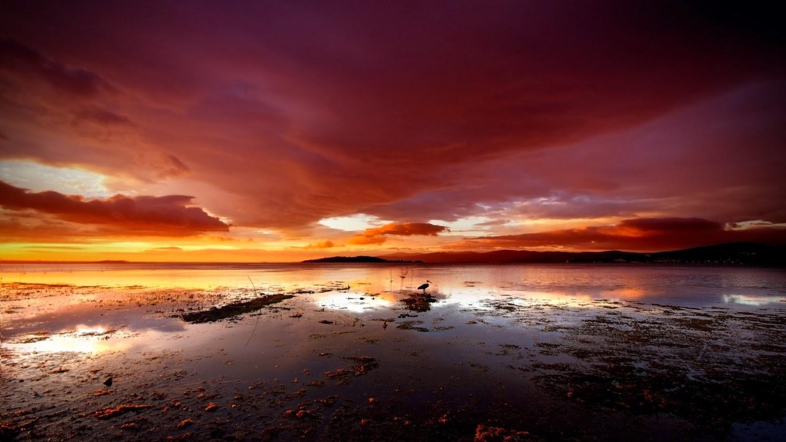Cielo rojo Swampland & Ave