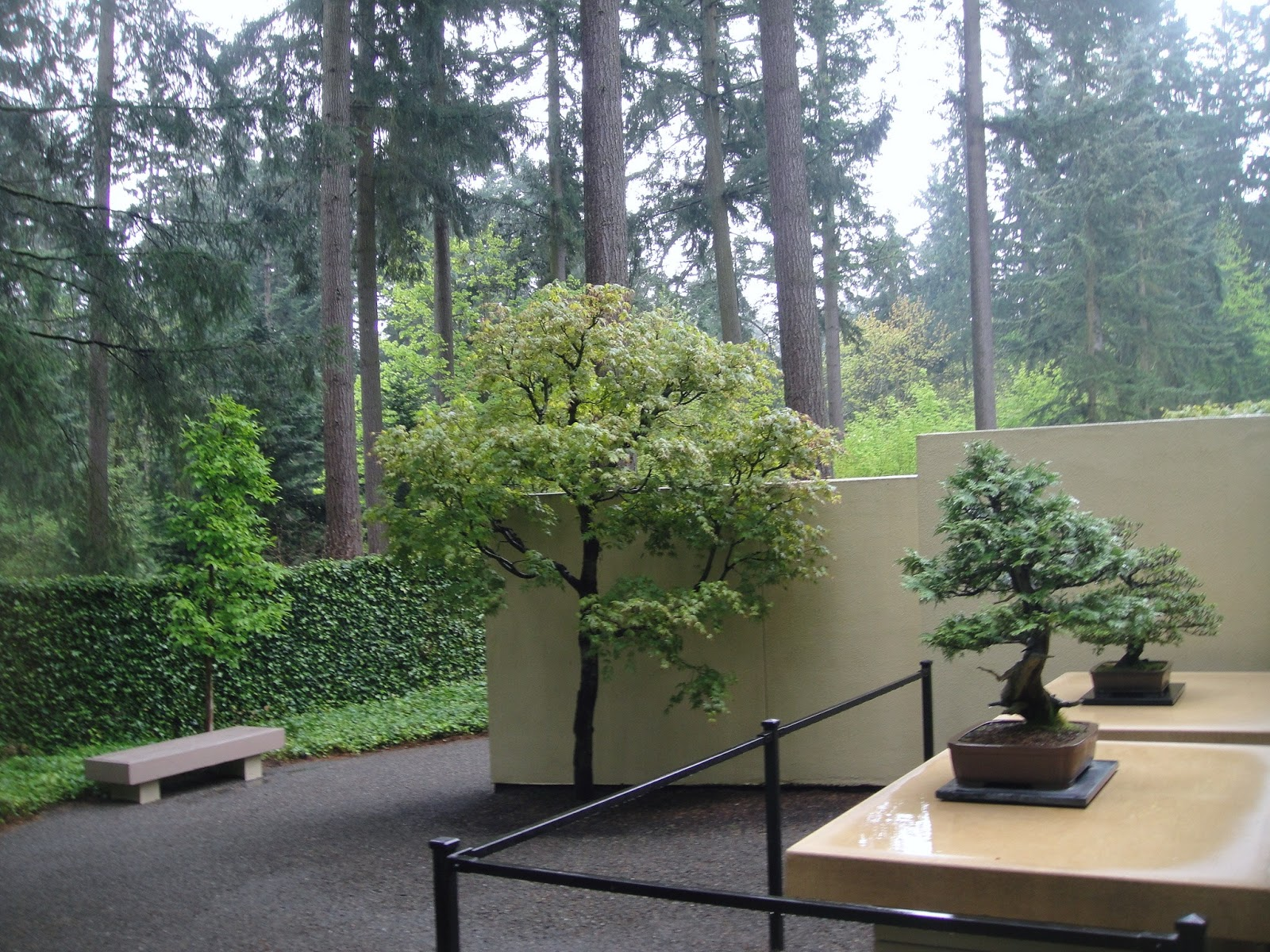 But Aesthetically Speaking, I Enjoyed This Bonsai Garden More Than The  Rhodies In This Location. The Garden (and Bonsai) Invokes Elegance; A Sense  Of Museum ...