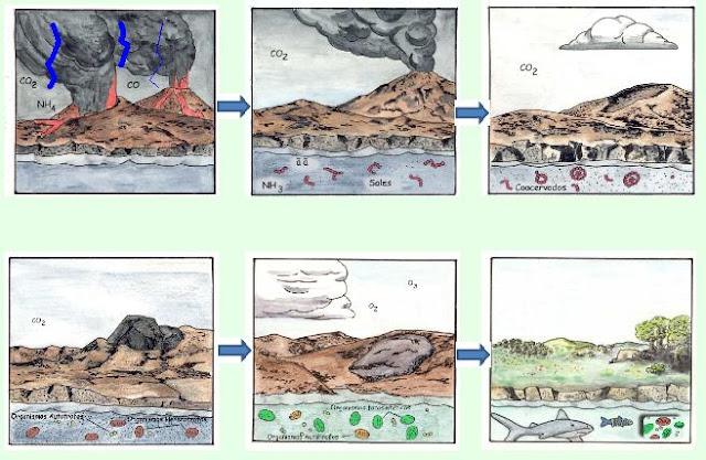 Evolucion Quimica y Celular Figura 9 Evolución Química