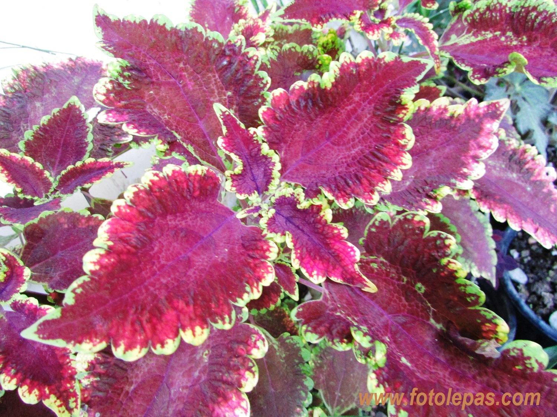 Foto Lepas Bunga Batik