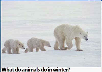 http://www.planet-science.com/categories/under-11s/our-world/2011/10/what-do-animals-do-in-winter.aspx