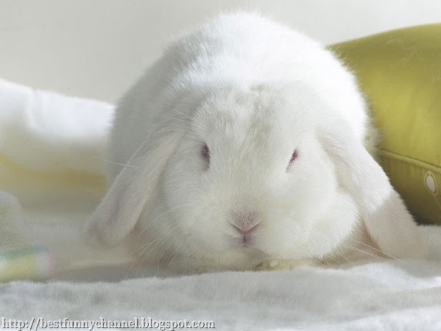 Cute white rabbit.