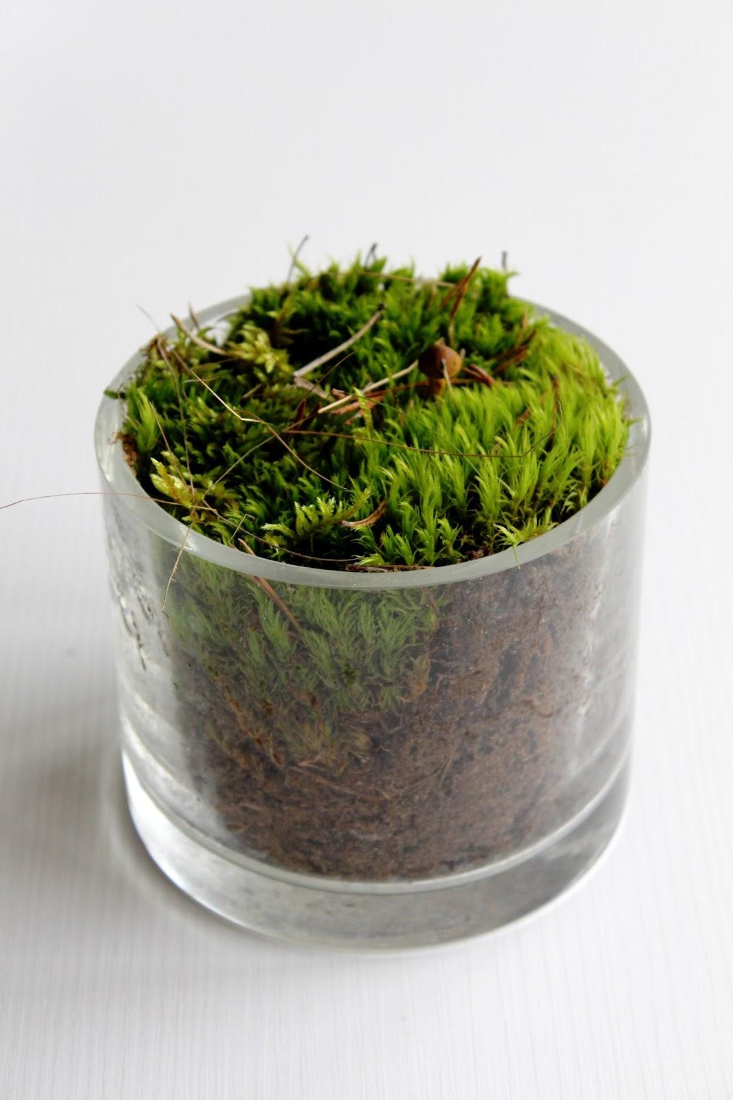Как вырастить мох в доме 64