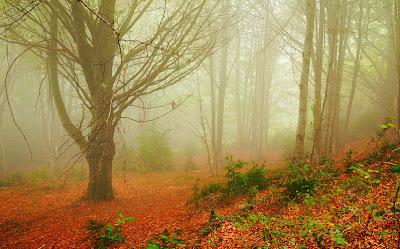Bosque mágico de paisajes inolvidables (4 fotos)