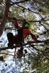 Manuais seguridade nos traballos forestais
