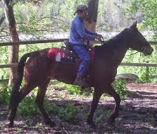 image Ember being ridden with sadde