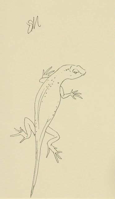 Lizard, art, sketch, line-drawing, reptile, arte, Sarah Myers, S. Myers, ink, animal, drawing, spontaneous