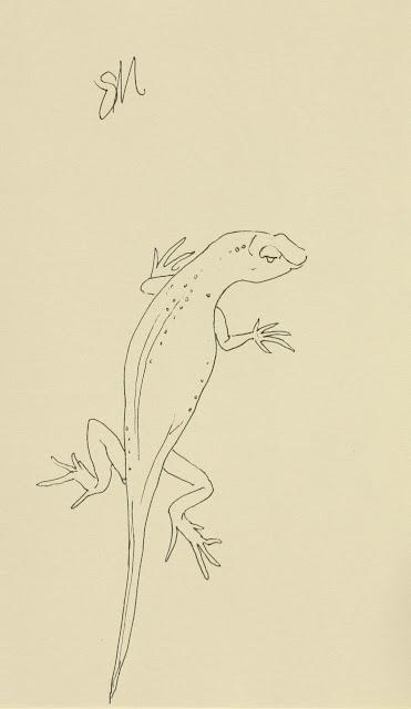 Lizard, art, sketch, line-drawing, reptile, arte, Sarah Myers, S. Myers, ink, animal, drawing, spontaneous