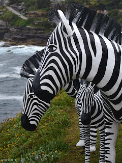 the zebras of bondi