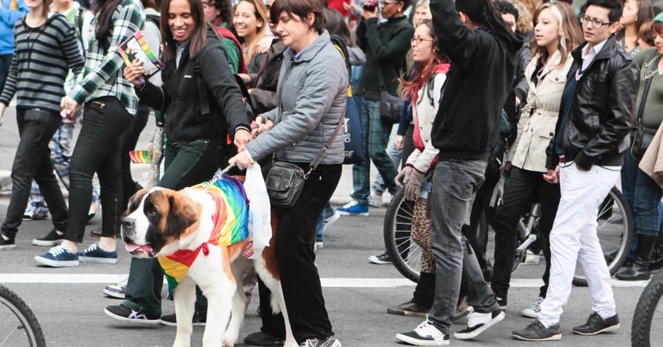 Participante de manifestação veste cachorro com bandeira do movimento LGBT durante a 10ª Caminhada de Lésbicas e Bissexuais em São Paulo (Foto: Fernando Donasci)