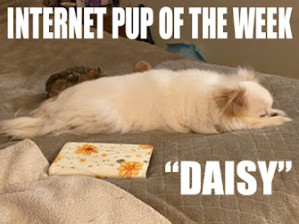 INTERNET KITTY OF THE WEEK!