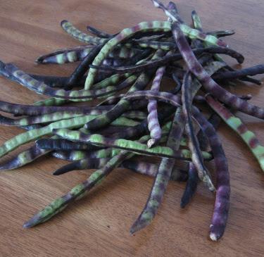 fresh shelling beans