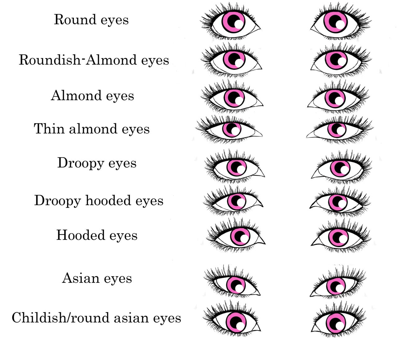 Eye Features Humans The Human Eye