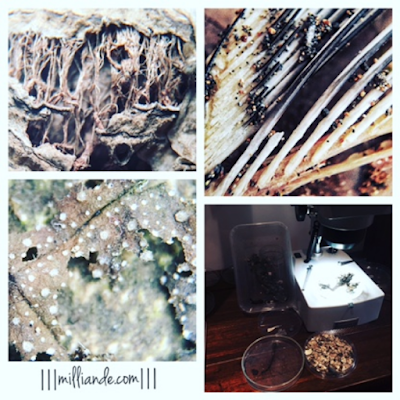 III milliande de III Earthed Trend Moodboard Textile Design and Surface Pattern Microscopic