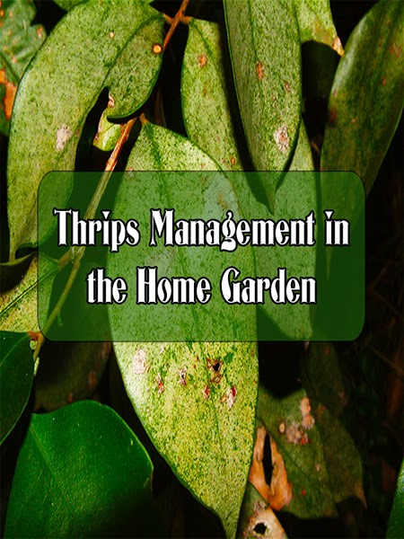 Thrips Management in the Home Garden