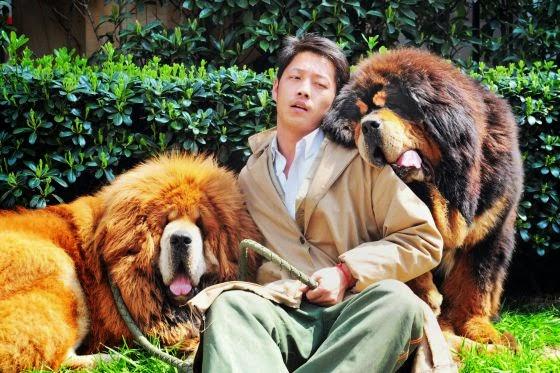 Los perros de dos millones que son la �ltima moda en China