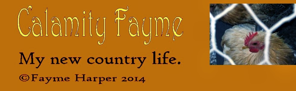 Calamity Fayme