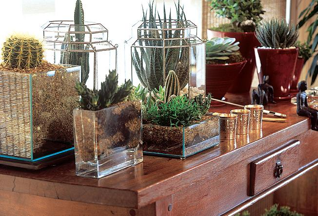 Como deixar seu jardim perfeito plantas protetoras for Plantas para interiores feng shui