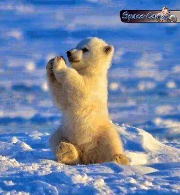 funny cute baby bear