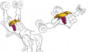 Верхние пучки грудных мышц, малые грудные, передние пучки дельт. Отжимания- это базовое