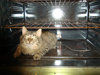 Cat in oven, jewish cat, silly maine coon