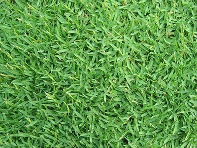PHILIPPINES GRASS