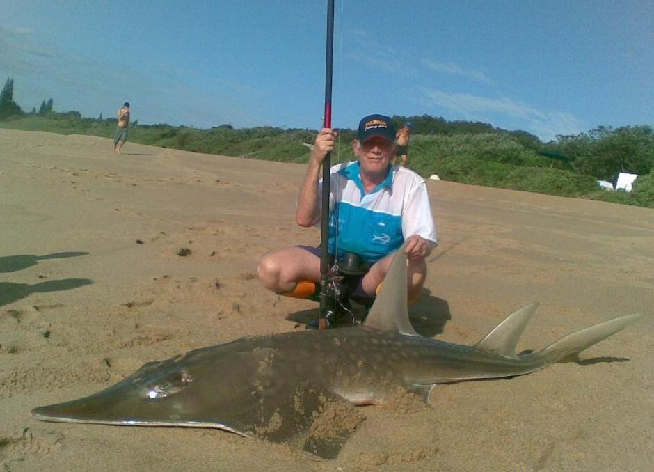 Big fishes of the world guitarfish shovelnose shark for Biggest fish in the world