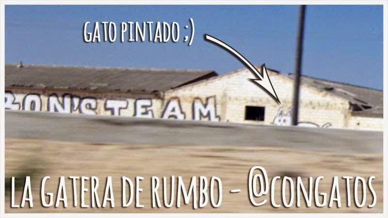 Gato Miau La Roda Albacete 2