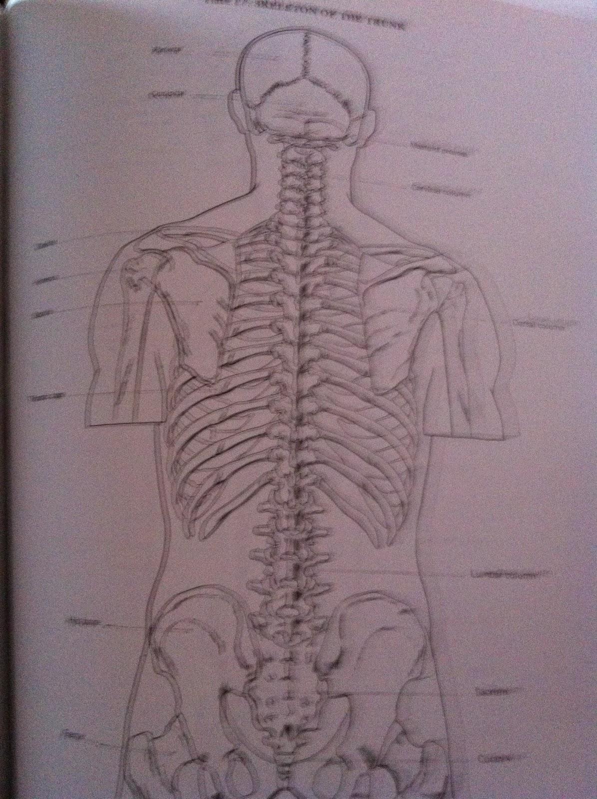Artistic anatomy by dr paul richer