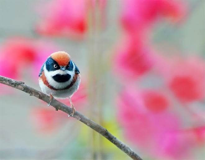 http://www.funmag.org/pictures-mag/animals-and-birds/beautiful-birds-photos-by-john-soong/