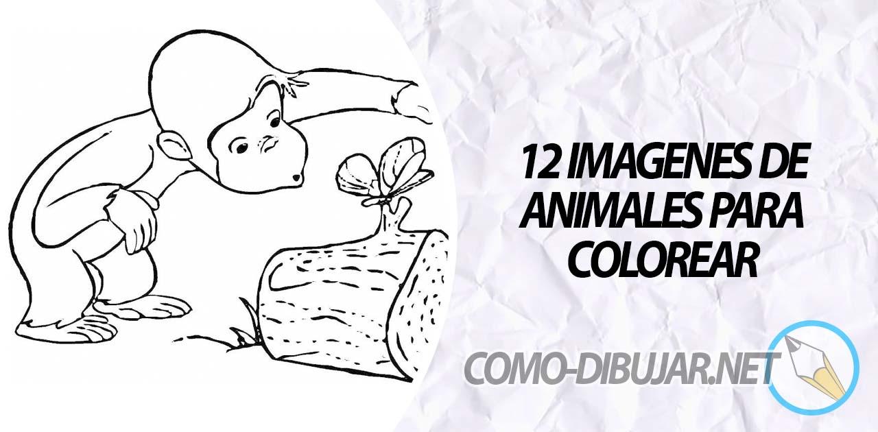 12 imágenes de Animales para Colorear