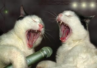 Funny Picture of Animals : Animal Sing7