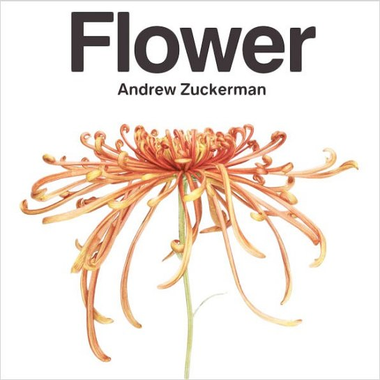 Flower by Andrew Zuckerman, botanic photography