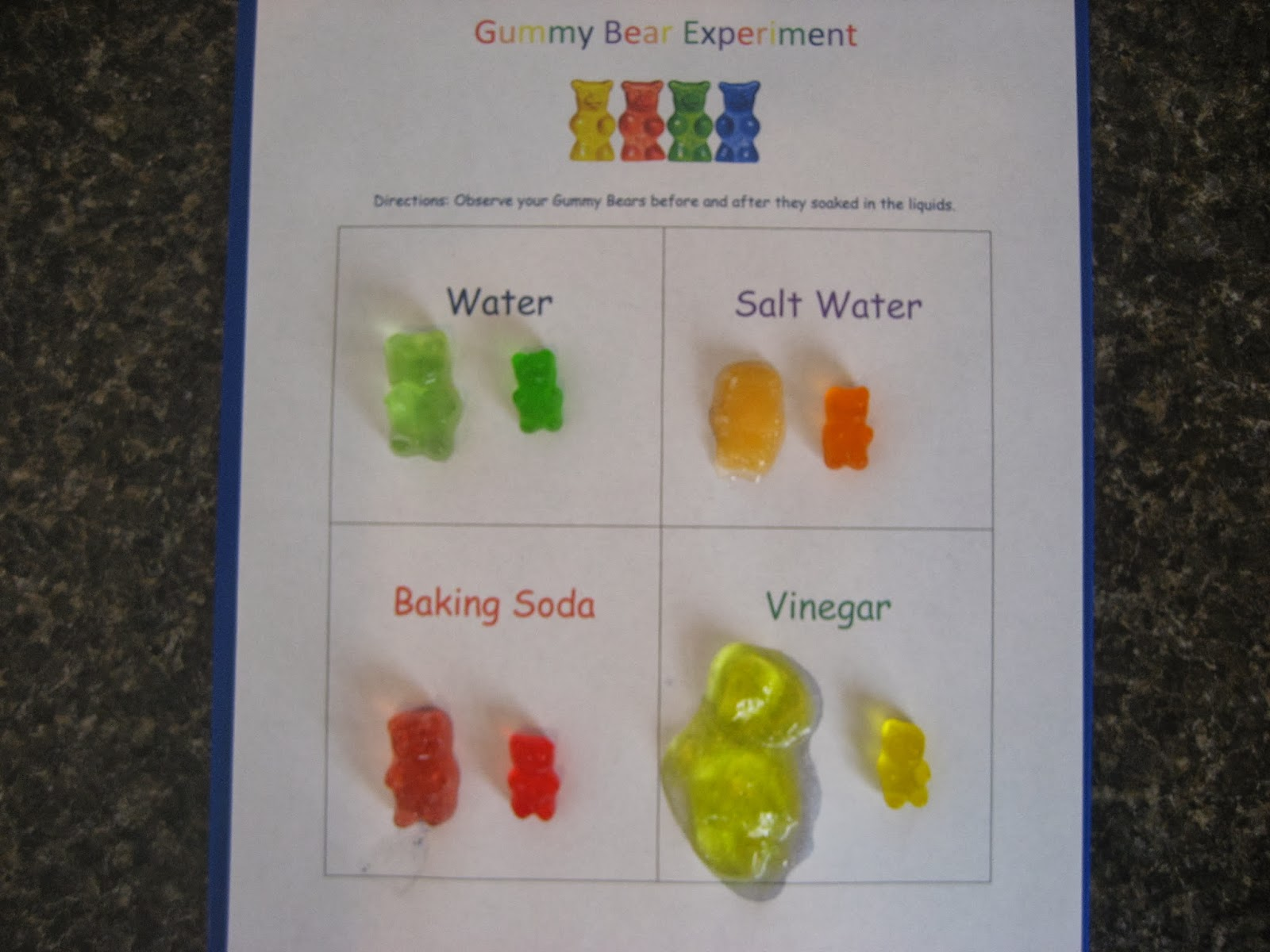 living our homeschool life a balancing act of faith gummy bear experiment. Black Bedroom Furniture Sets. Home Design Ideas