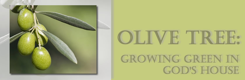 Olive Tree: Growing Green in God's House