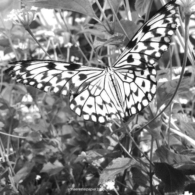 Schaeresteipapier Ausmalbilder Schmetterlinge