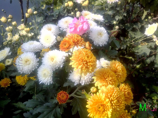 Metro Greens: Orange & White Chrysanthemums