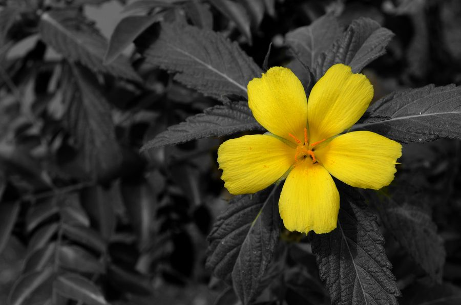 6. The Happy Color Stands Out by Prakash Yalamarthi