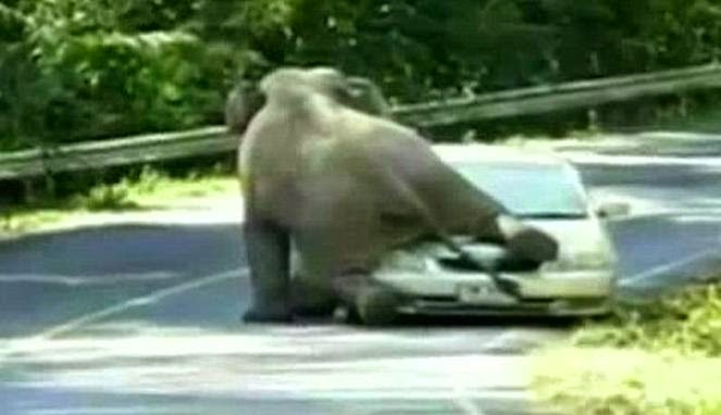 Mobil di Serang Gajah