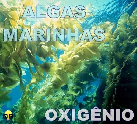 algas marinhas e oxigênio