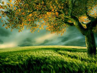 صورة شجرة وسط ارض خضراء جميلة HD جدا