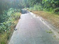 Leśna scieżka asfaltowa