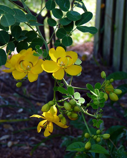 Rosemary, palomitas de maíz de Cassia en una caminata geodésica del jardín de la bóveda del Bio | Bren Haas