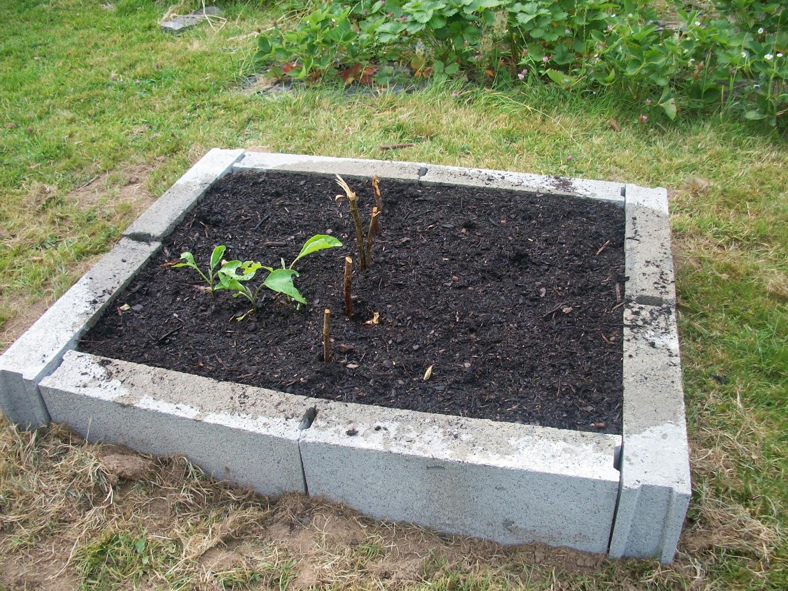 Les8jika au jardin carr s potager for Blog jardin potager