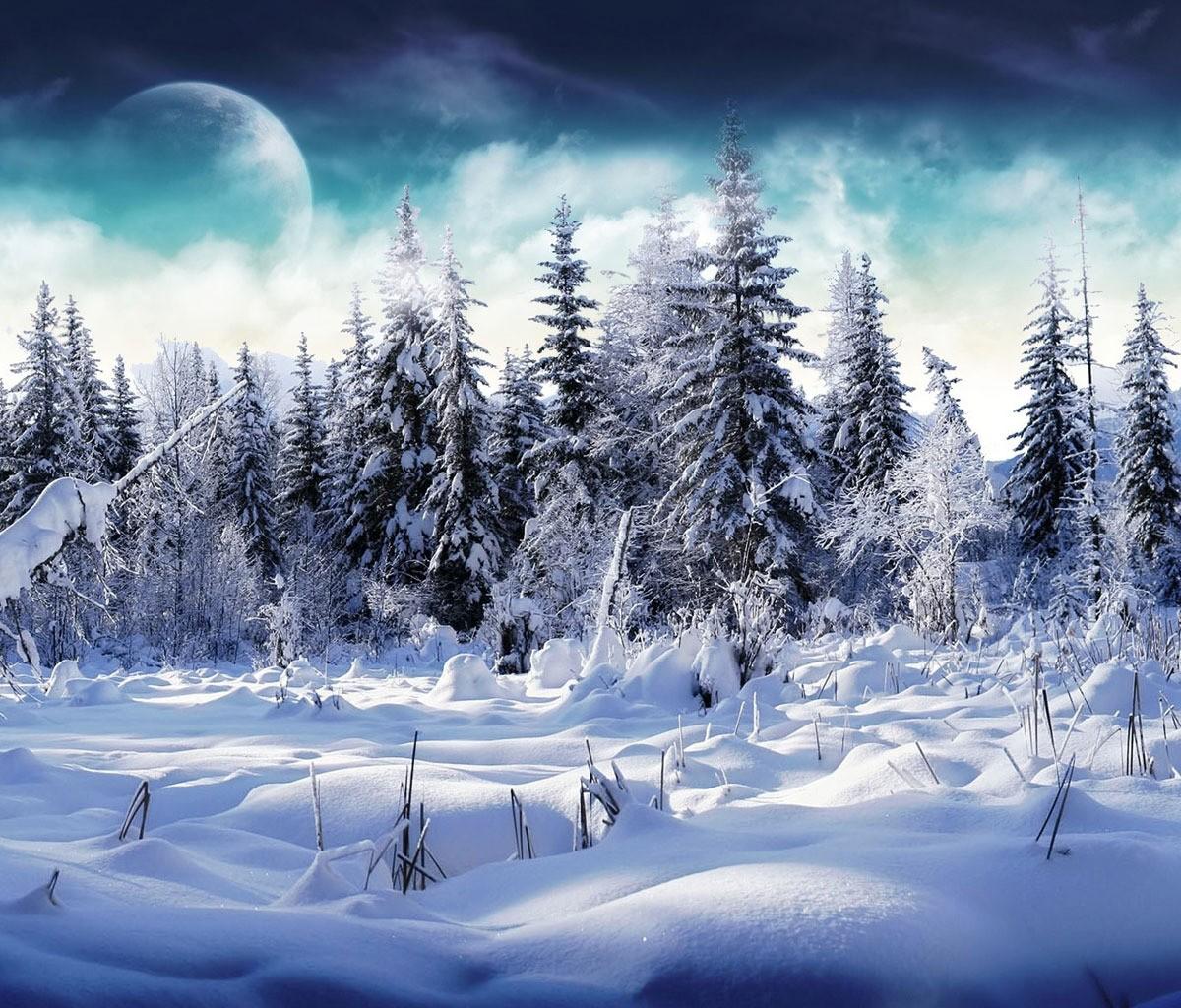 http://1.bp.blogspot.com/-D3rFIO92jwI/T6uUGR32nPI/AAAAAAAACjU/X0gTOzYkndY/s1600/Tablet-snowy-trees-1200x1024.jpg